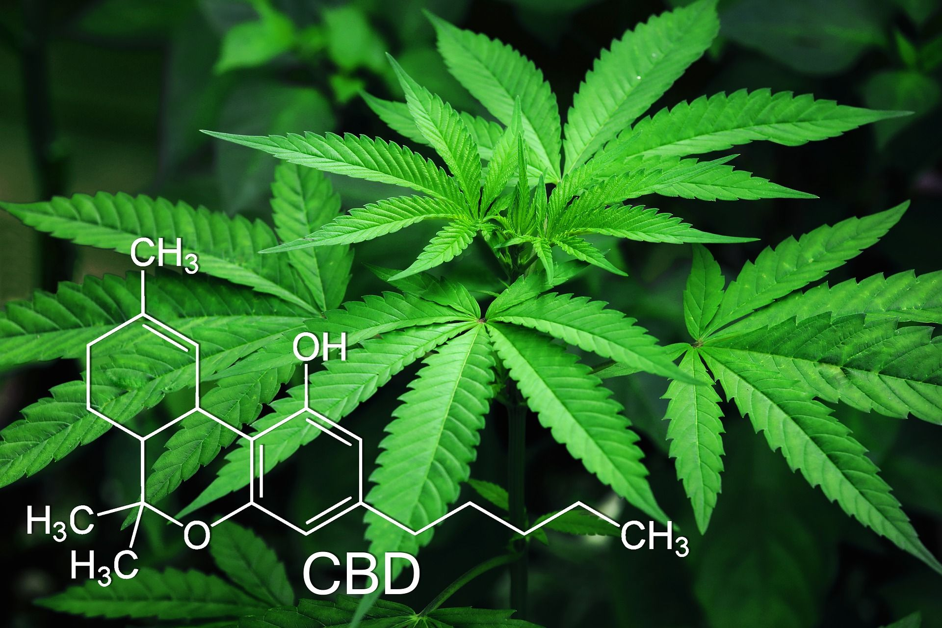 marihuana con CBD y sexo con escorts
