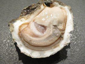 receta afrodisíaca con ostras